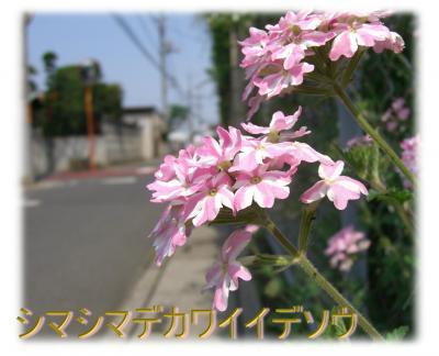 09050902_convert_20090509172305.jpg