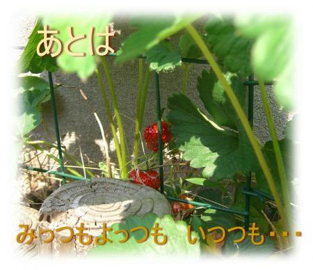 09051002_convert_20090510165803.jpg