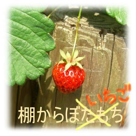 09051003_convert_20090510165825.jpg