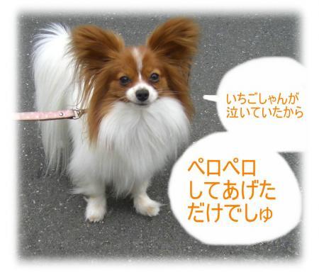 09051101_convert_20090511150537.jpg