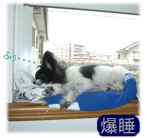 09051421_convert_20090514214241.jpg