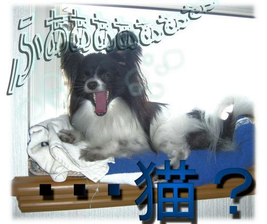 09051422_convert_20090514214314.jpg