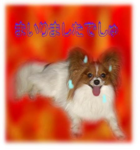 09051427_convert_20090514225912.jpg