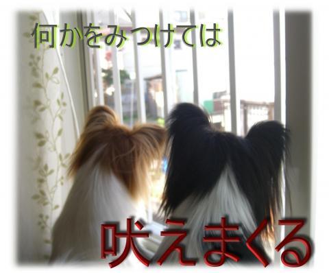 09051430_convert_20090515083205.jpg