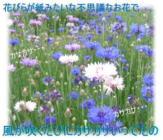 09051901_convert_20090519211410.jpg