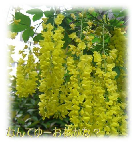 09051903_convert_20090520095931.jpg