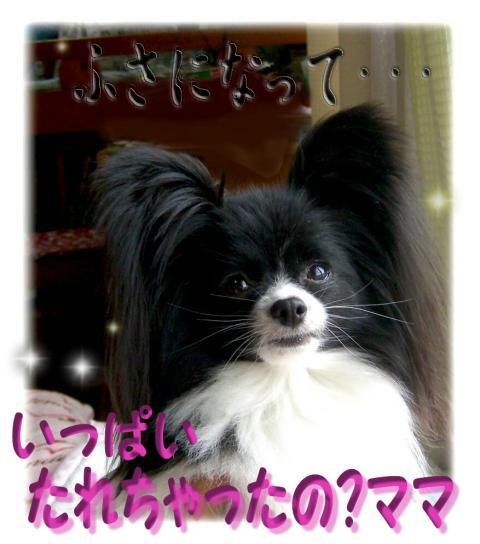 09052001_convert_20090520100211.jpg