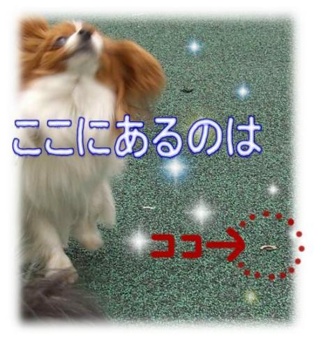 09052002_convert_20090520104121.jpg