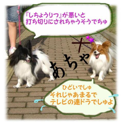 09052016_convert_20090520184638.jpg