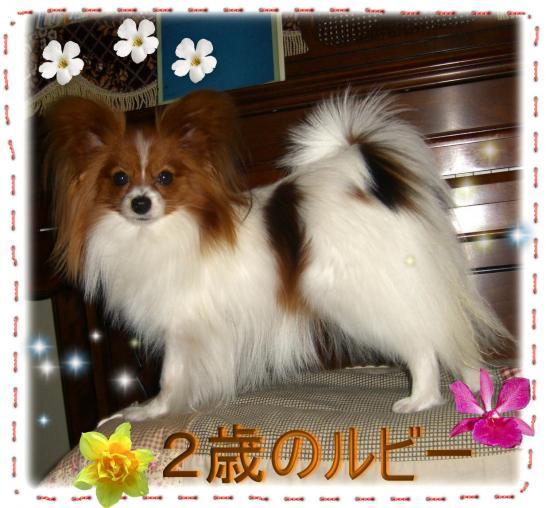 09052018_convert_20090520142549.jpg