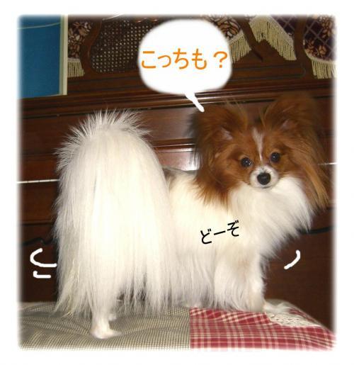 09052019_convert_20090520142630.jpg