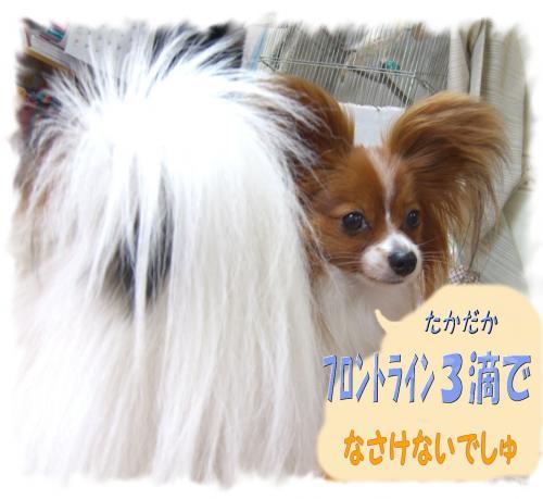 09061405_convert_20090614163214.jpg