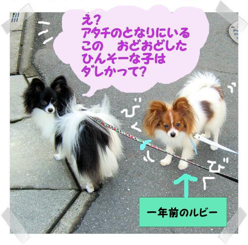 09072408p_convert_20090724150958.jpg