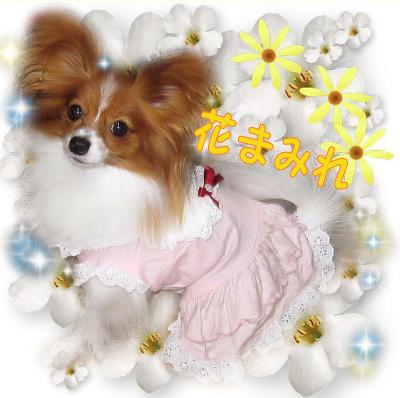 09100912p_convert_20091009125530.jpg