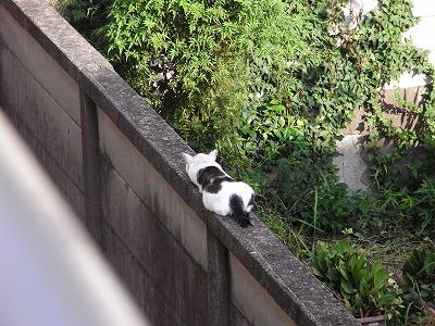 近所の猫村さん