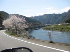 高知の旅 桜 076