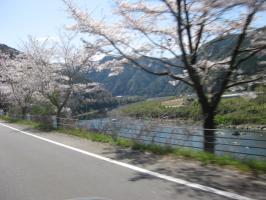 高知の旅 桜 077