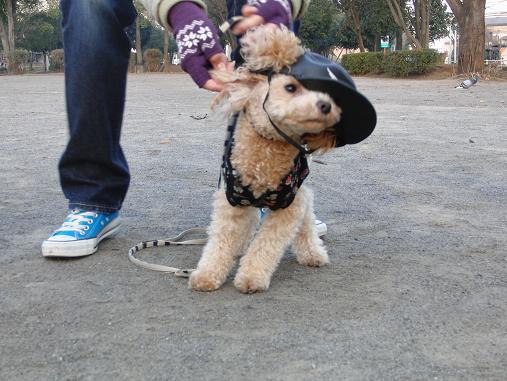 メープル君のデッカイ帽子