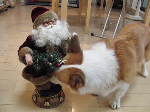 サンタに挨拶!?するベル