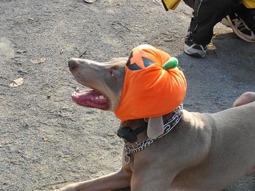 ランス君のかぼちゃ