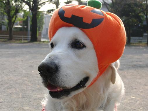 かぼちゃの王子様!!