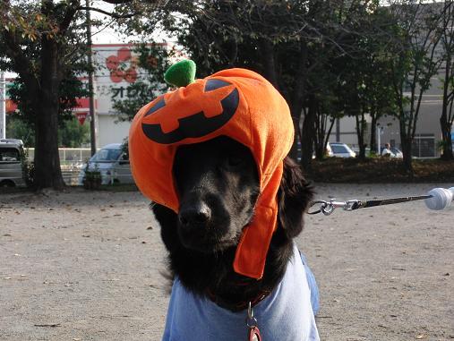 マックス君のかぼちゃ
