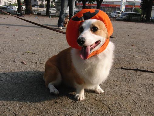 ベルのかぼちゃ
