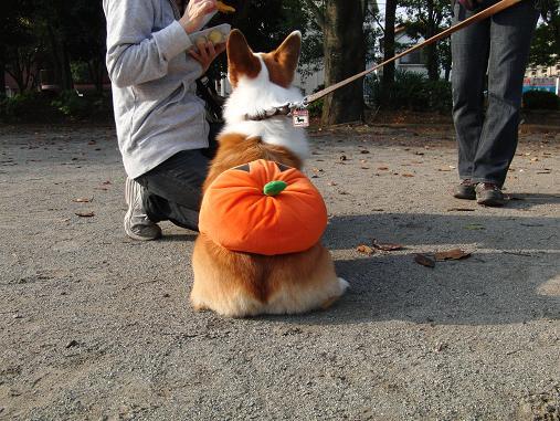 ベルのかぼちゃパンツ