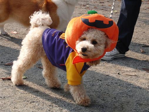 メープル君のかぼちゃ