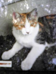 Image374_convert_20081207214409.jpg
