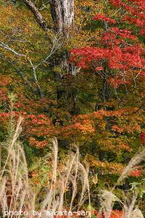 秋の景色☆