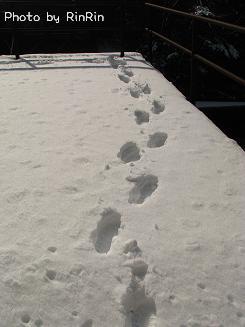 RinRinは大足??いえいえ、相方さんの足跡です。