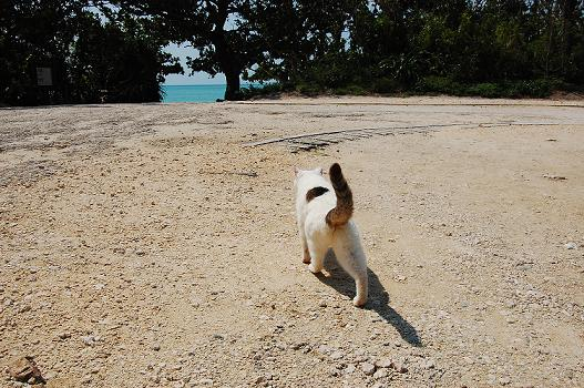 八重島の猫と海