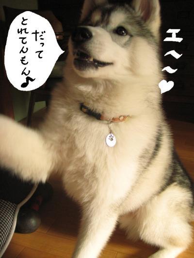 えへへ_convert_20090920021905