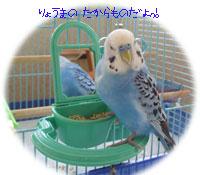ryo6.jpg