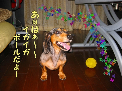 h-IMG_1330.jpg