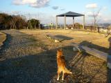 散歩blog