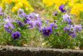 駅に咲く花