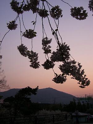 背景は藻岩山