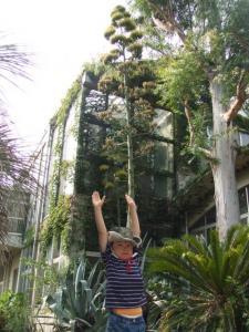 2008年8月13日植物