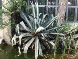 2008年8月13日植物1