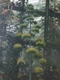 2008年8月13日植物3