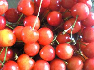 cherry08.jpg