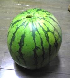 watermelon01a.jpg