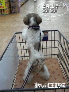 ショッピングカートは立ち乗りよ♪