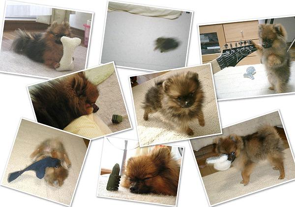 puppykota-T.jpg