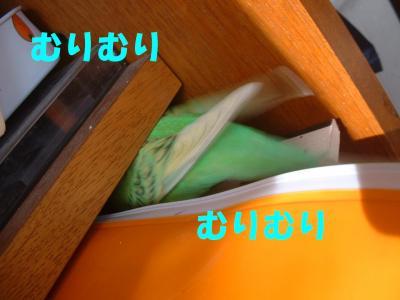 hatujou1.jpg