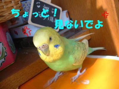 hatujou2.jpg