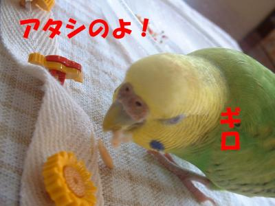 papagaro2.jpg