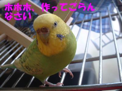 waiya-tori3.jpg